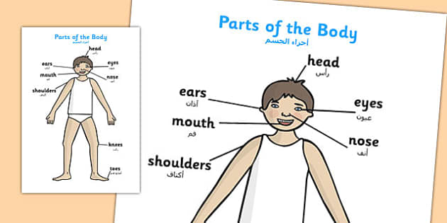 Parts of the Body A4 Head and Shoulders Arabic Translation - arabic