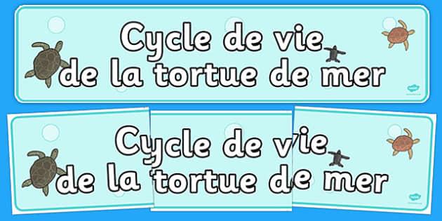Tortue vie cycle afficher la bannière - francais, tortue, de mer, tortue de mer