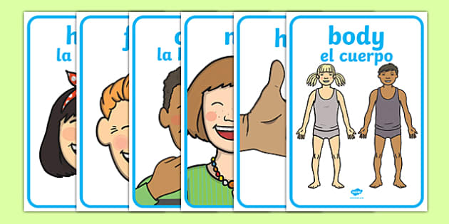 My Body Display Posters English/Spanish