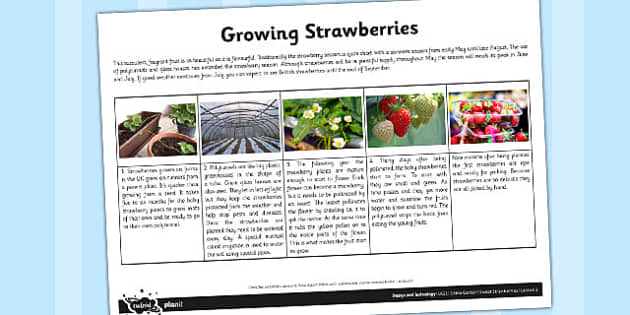 Fact Sheet Growing Strawberries - garden, strawberry, plants