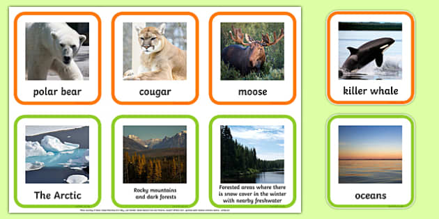 Animal Habitats Matching Cards