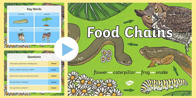 Food Chain PowerPoint - food chains, animal food chains, food chain games, food chain information, plant and animal food chains, all about food chains, ks2