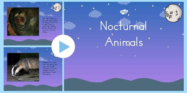 Nocturnal Animals PowerPoint - australia, nocturnal, animals