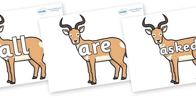 Tricky Words on Antelopes - Tricky words, DfES Letters and Sounds, Letters and sounds, display, words