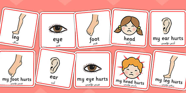 Parts of the Body Communication Cards Arabic Translation - arabic