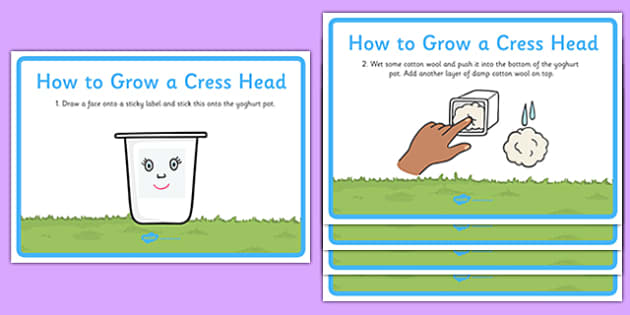 How to Grow a Cress Head Display Posters - how to grow a cress head, display, banner, sign, poster, growing, cress, cress head, how to, grow, instruction