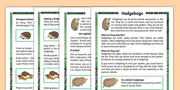 Hedgehogs Differentiated Fact File Polish Translation-Polish-translation