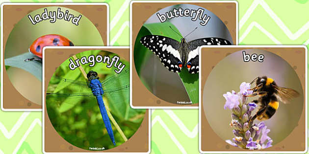 Minibeast Display Photo Cut Outs - minibeasts, display photos
