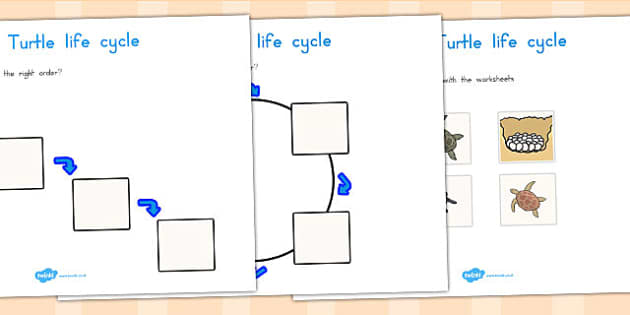 Sea Turtle Life Cycle Worksheets - life cycles, lifecycles