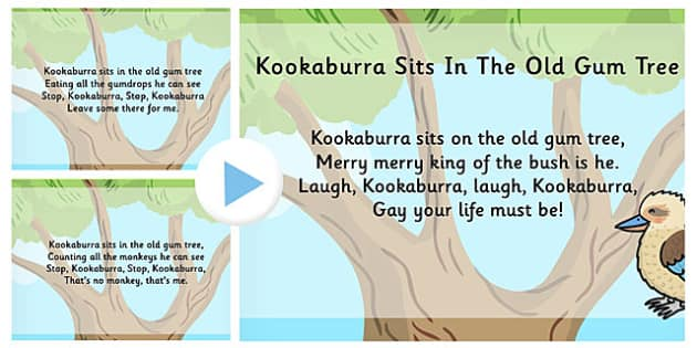 Kookaburra Sits in the Old Gum Tree Song PowerPoint - song, tree