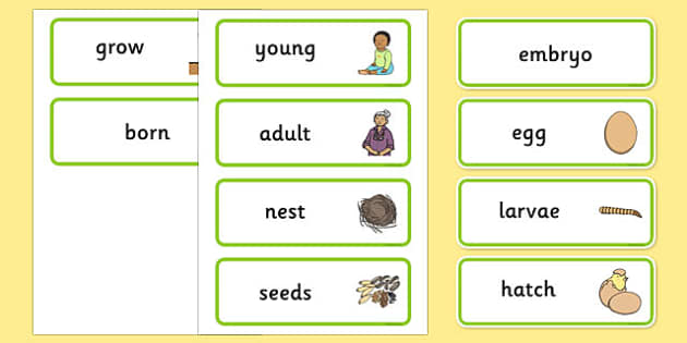 Life Cycles Word Cards - life cycle, visual aid, key words, cards