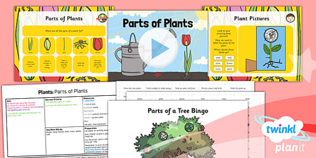 PlanIt - Science Year 1 - Plants Lesson 5: Parts of Plants Lesson Pack