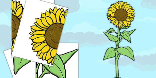 Large Sunflower Cut Out - large, sunflower, cut out, cut, out