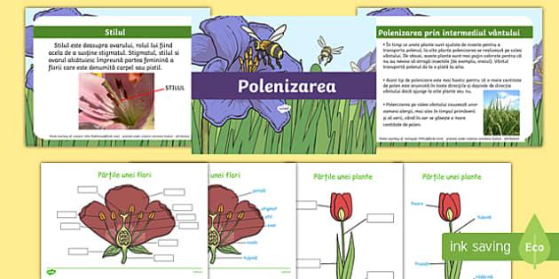 Polenizarea - Pachet cu activități