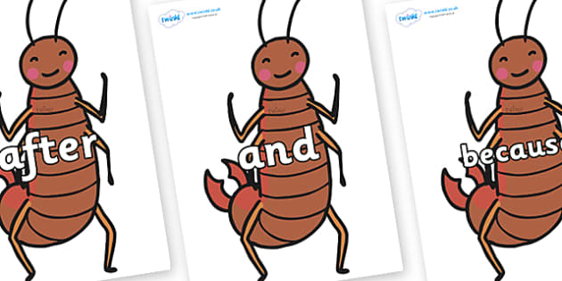 Connectives on Earwigs - Connectives, VCOP, connective resources, connectives display words, connective displays