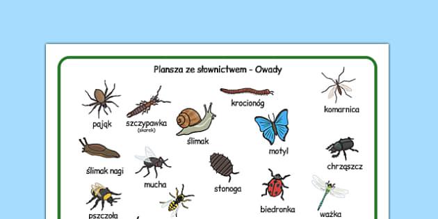 Plansza ze słownictwem Owady po polsku - przyroda