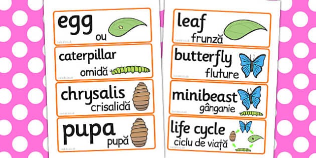 Life Cycle Of A Butterfly Word Cards Romanian Translation - cycles