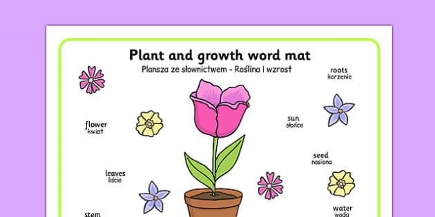 Plant and Growth Word Mat Polish Translation - polish, Plant, Growth, Word Mat, Topic, Foundation stage, knowledge and understanding of the world, investigation, living things