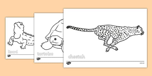 Desert Animals Colouring Sheets - desert animals, colouring sheet, colour, desert, animal, habitat