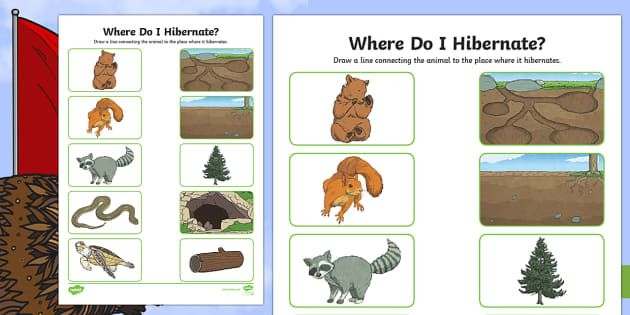 Where Do I Hibernate? Activity Sheet - Great Canadian Animals, hibernation, animals, Canada, winter, bear, worksheet, cave, turtle, mud, sq