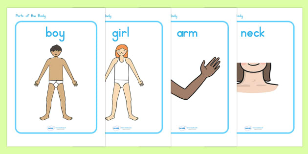 Parts of the Body Display Posters - body, body parts, ourselves