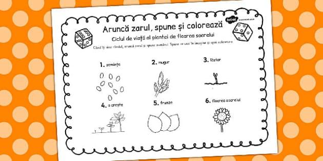 Floarea Soarelui- Ciclul de viata, Joc Spune si Coloreaza, Romanian