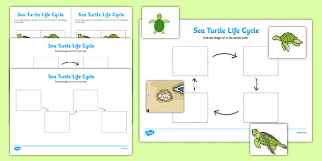 Sea Turtle Life Cycle Worksheets (Under the Sea) - worksheets