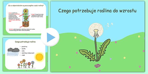 Prezentacja PowerPoint Czego potrzebuje roślina po polsku