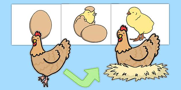 Hen Life Cycle Cut Outs - life cycles, cutouts, display, hens
