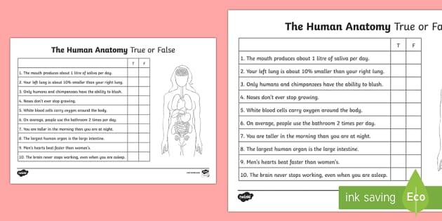 The Human Anatomy True or False Activity Sheet - The Human Body, human, body, anatomy, health, body parts, worksheet, true, false