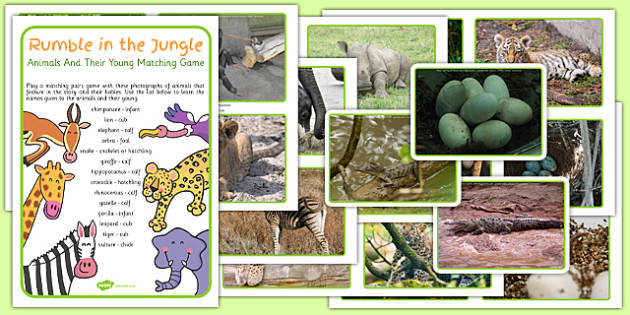 Animals and Their Young Matching Game to Support Teaching on Rumble in the Jungle - game