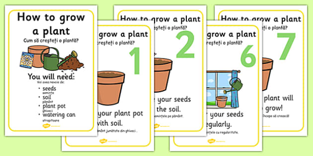 How to grow a Plant Posters Romanian Translation -  life, mrs, gren, nature, environment, habitat, sustenance, water, growth, nature, geography