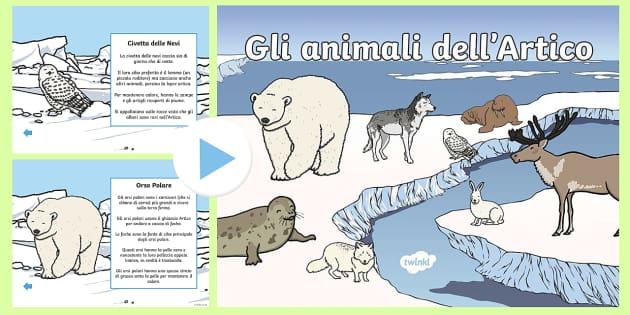 Gli animali dell'Artico Power Point - Animali dell\'artico, artico, animali, power point, invernale, inverno, italiano, italian