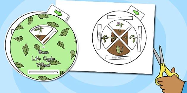 Bean Life Cycle Spin Wheel - australia, bean, life cycle, wheel