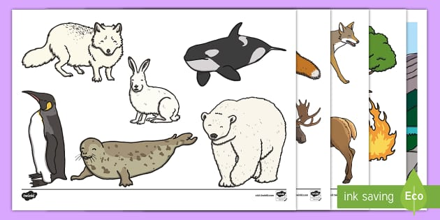 Canadian Animals Stick Puppets - animals, habitat, environment, environmental, issues, concerns, pollution, ecosystem, disaster, defo