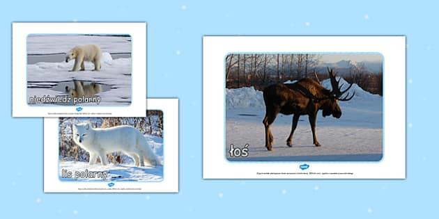 Materiały ze zdjęciami na gazetkę Zwierzęta polarne po polsku