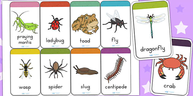 Minibeasts Flashcards - flash card, word cards, visual aids, card