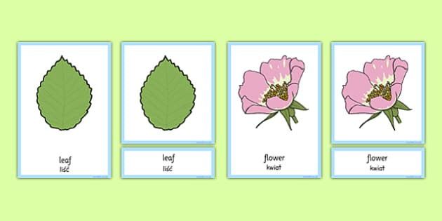 Plants and Growth Three Part Cards Polish Translation - polish, plants and growth, cards, plants, growth