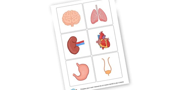 Human Organs Cards - KS2 Science, The Human Body, My Body, Skeleton, Organs, Worksheets