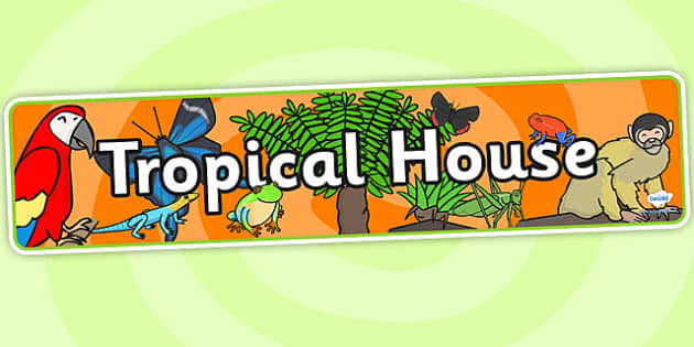 Tropical House Role Play Banner - tropical house, role play, tropical house themed, display banner, tropical house banner, role play banner