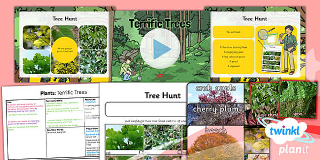 PlanIt - Science Year 1 - Plants Lesson 4: Terrific Trees Lesson Pack