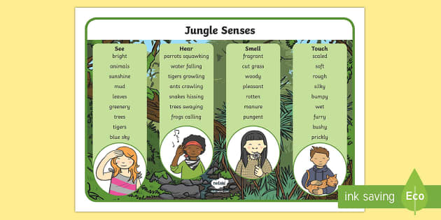 Jungle and Rainforest Sense Word Mat - jungle, rainforest, mat