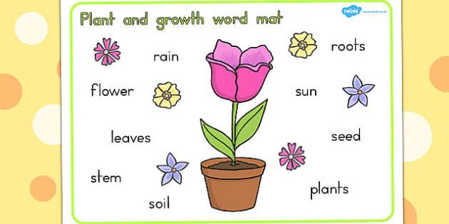Plant Growth Word Mat - Plant, Growth, Word, Mat, Vocabulary