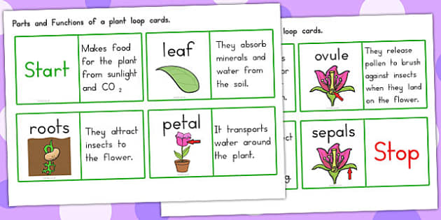 Parts of a Plant Loop Cards - plants, visual, visuals, aids