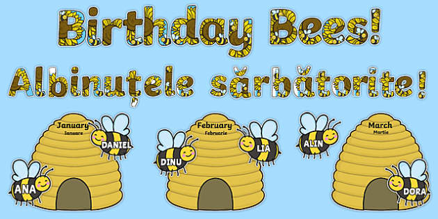 Birthday Bees Display Pack Romanian Translation-Romanian-translation