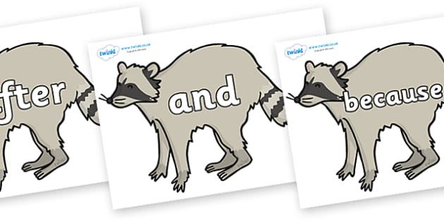 Connectives on Racoons - Connectives, VCOP, connective resources, connectives display words, connective displays