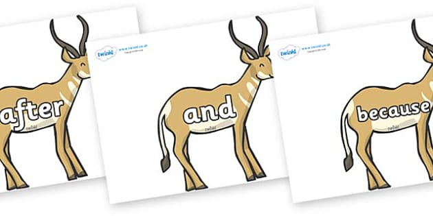 Connectives on Antelopes - Connectives, VCOP, connective resources, connectives display words, connective displays