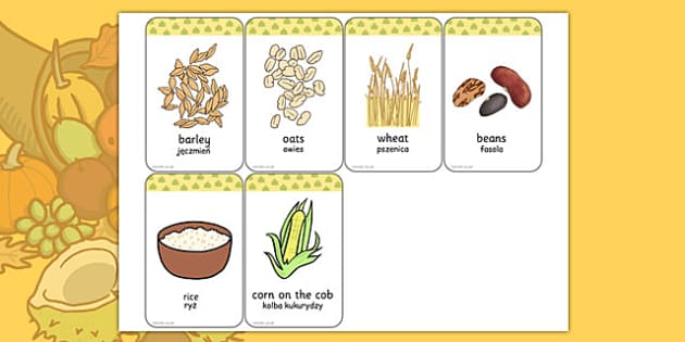 Harvest Grains Flash Cards Polish Translation - polish, harvest, grains, flash cards