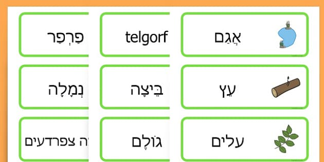 Life Cycle Word Cards - life cycles, lifecycle, visual aid, words - Hebrew