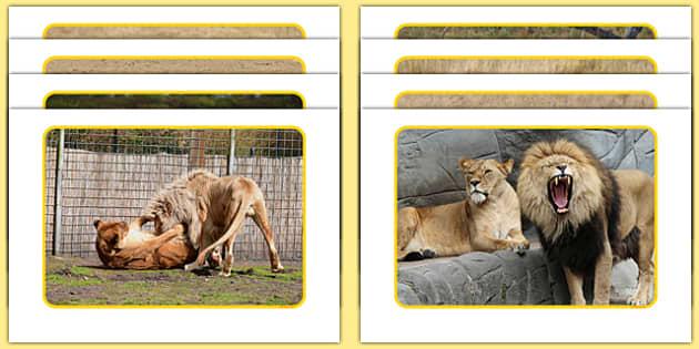 Lions Display Photos - Climb, eyfs, jungle, movement, dance, lions